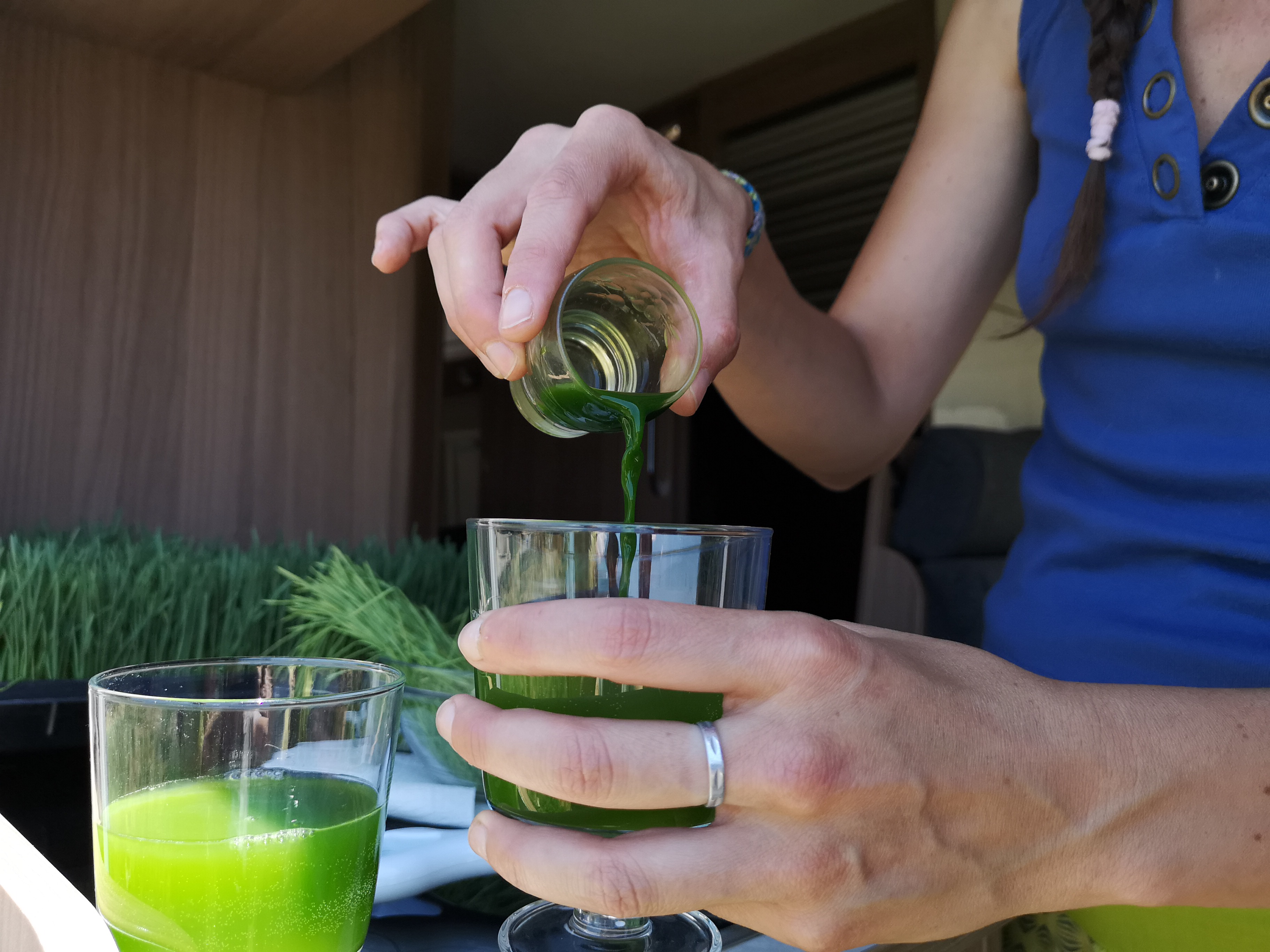 Viviendo la experiencia con el wheatgrass