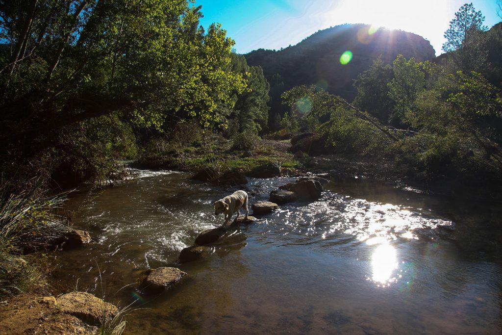 Simón cruzando el río